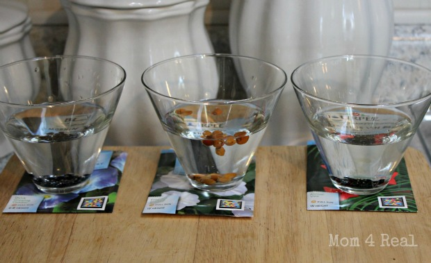 Clip seeds then soak in water overnight for fast germination