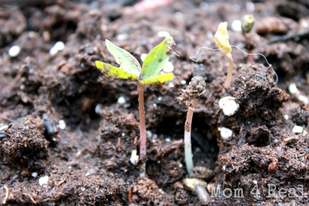 How to start seeds super fast
