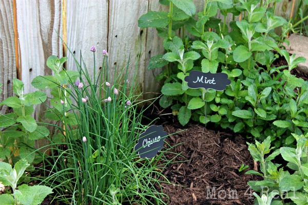 chalkboard plant markers herb garden