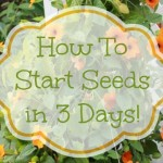 How To Start Seeds In 3 Days ~ Simple Gardening Tip
