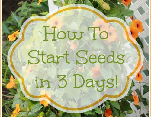 How To Start Seeds In 3 Days