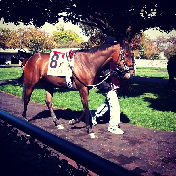 Horse at Keeneland