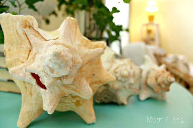A Beach Inspired Vignette Conch Shells