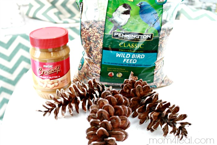Bird Seed Pine Cone Supplies