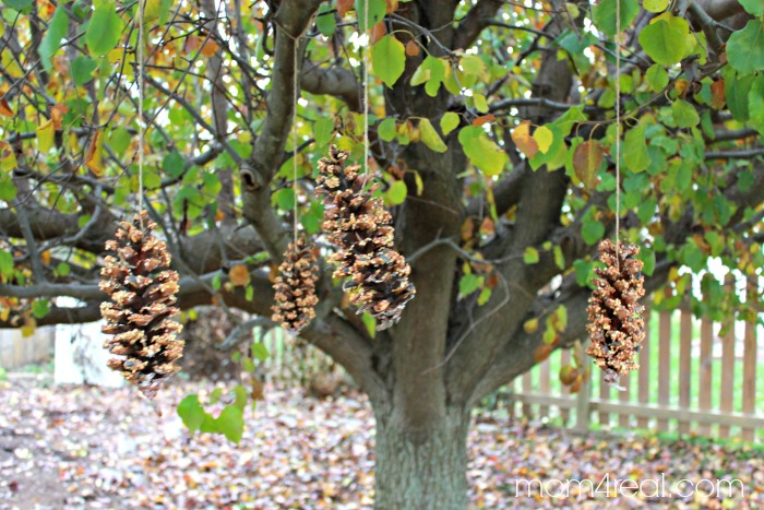 How to Make Hanging Bird Seed Pine Cones