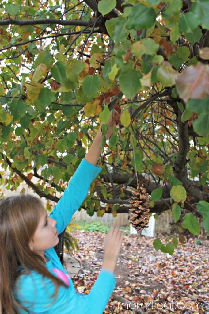 The Easiest Way to Make Bird Seed Pine Cones - Kid Friendly