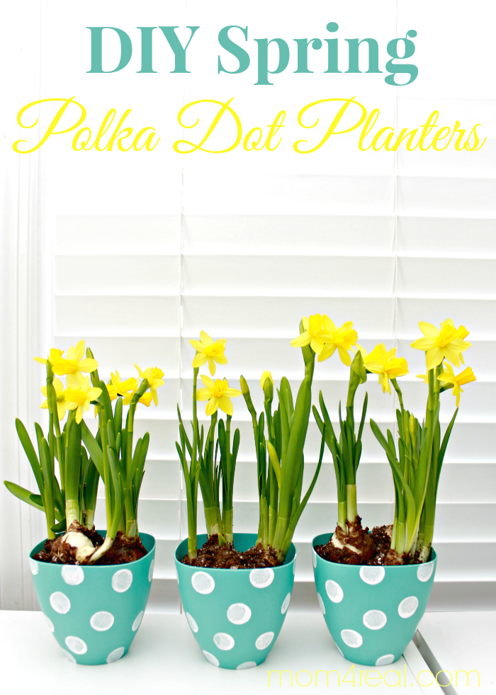 http://www.mom4real.com/wp-content/uploads/2014/03/DIY-Spring-Polka-Dot-Planters.png