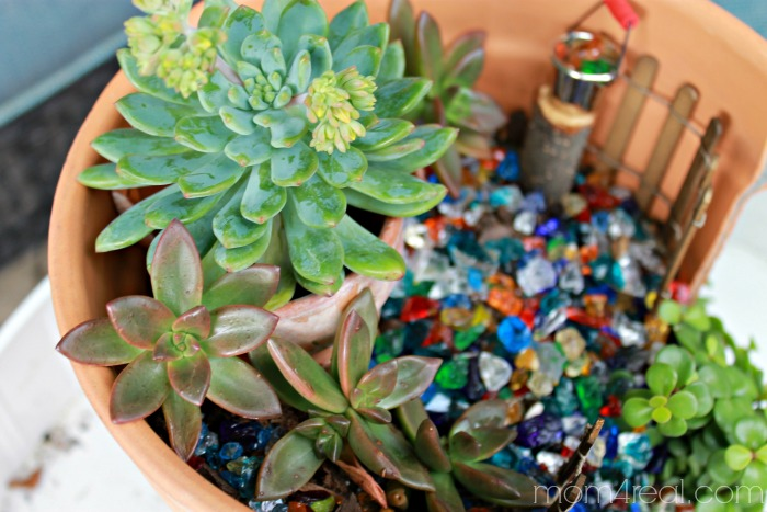 Succulents Fairy Garden