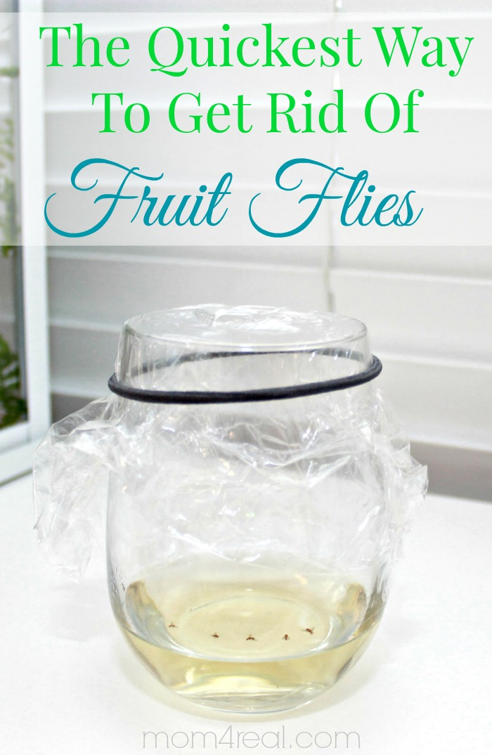 How To Get Rid Of Fruit Flies Or Gnats Tip Of The Day Mom 4 Real