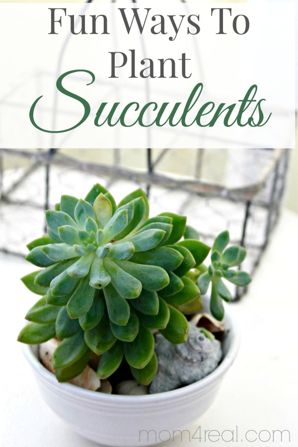 5 Ideas for Planting Succulents at Home!