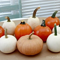 Tips For Throwing a Pumpkin Decorating Party