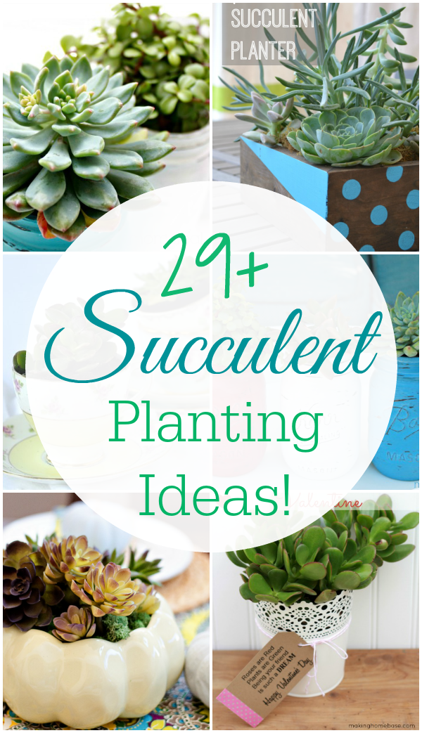 29-Succulents-Planting-Ideas