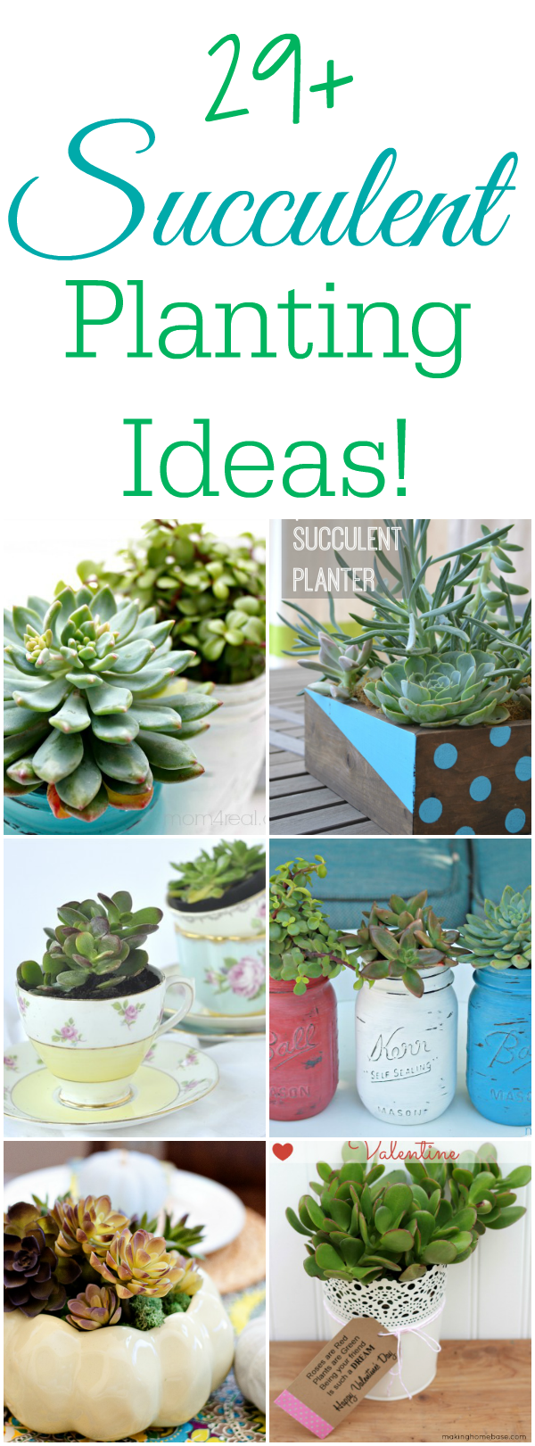 29 Plus Succulent Planting Ideas