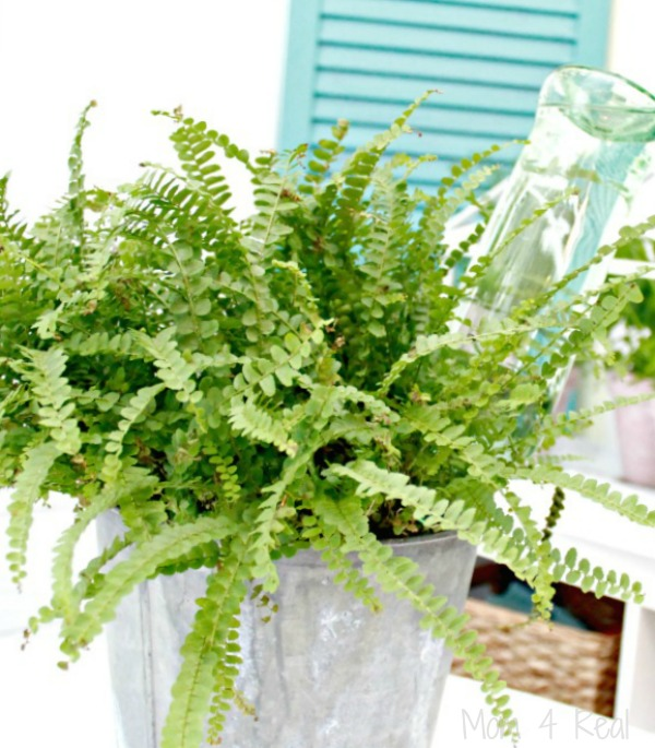 http://www.mom4real.com/wp-content/uploads/2015/03/Fern.jpg