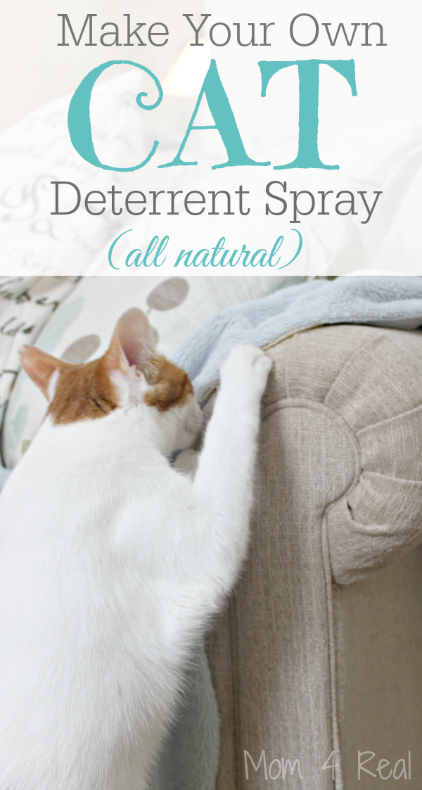 DIY Cat Deterrent Spray - Keeps cats from urinating on carpet and scratching furniture