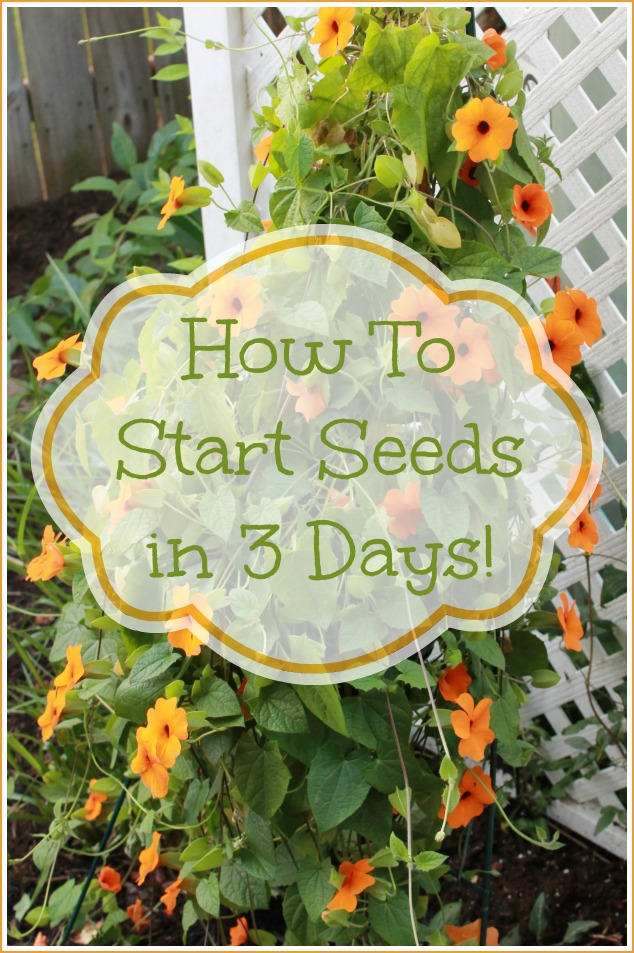 How To Start Seeds In Three Days