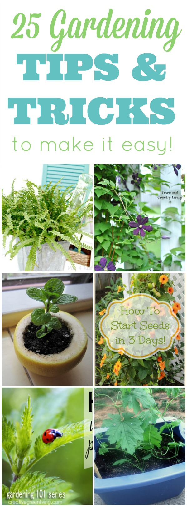 24 Gardening Tips and Tricks