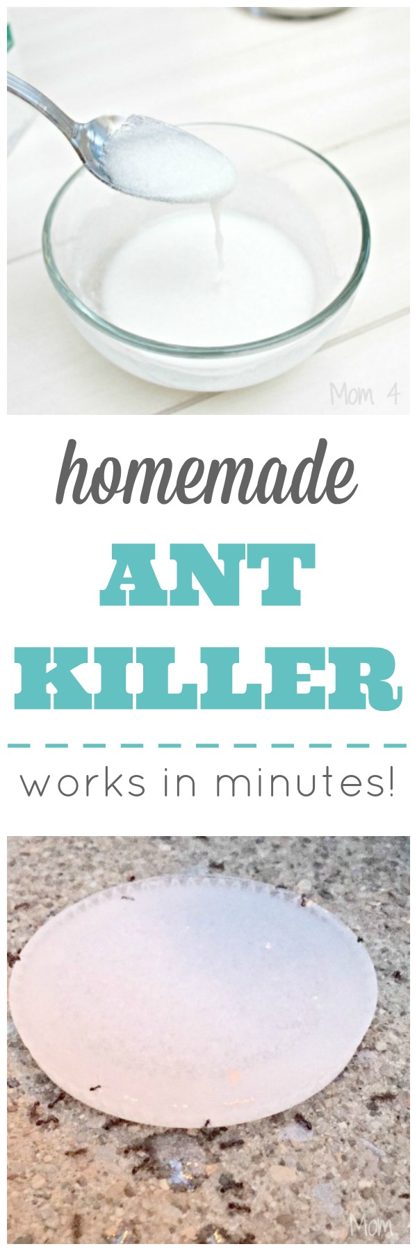 Homemade Ant Killer Works In Minutes Mom 4 Real