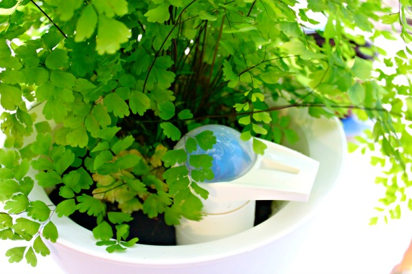 Planter-Waters-Plants