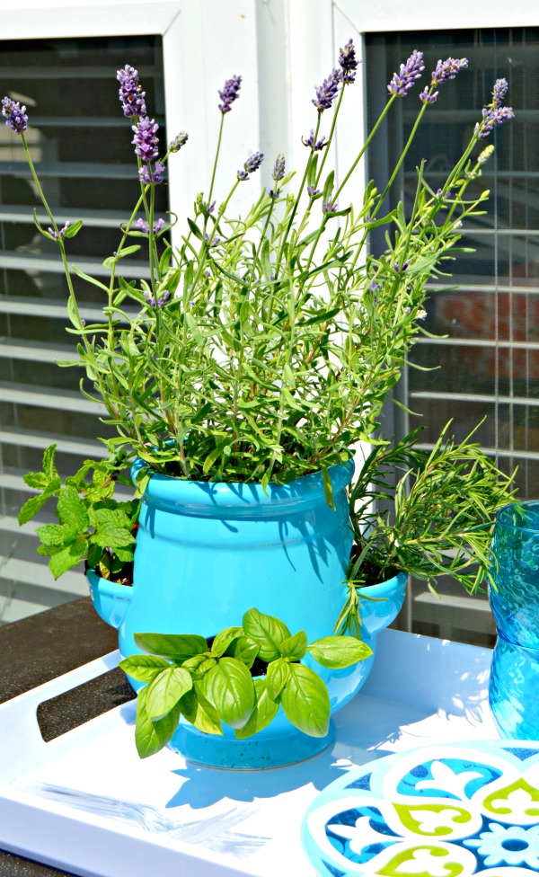 How To Plant A Mini Herb Garden