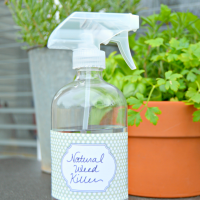 Homemade Weed Killer – All Natural