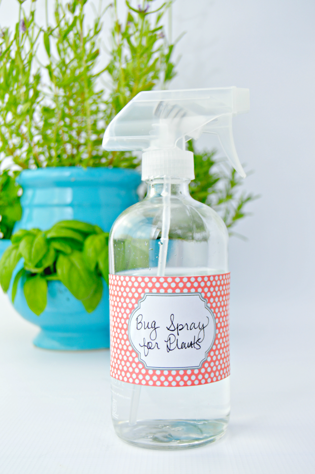 Homemade Bug Spray For Plants - Mom 4 Real on indoor ant spray, indoor fly spray, indoor bug killer for plants, indoor plant books, houseplants plants diseases spray, indoor house plant pests, indoor plant pests and diseases, indoor plants from bug, indoor plant insects, organic plant spray,