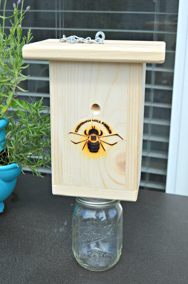 How To Trap And Kill Carpenter Bees Wood Wasps Hornets Yellow