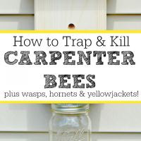 How to trap and kill carpenter bees