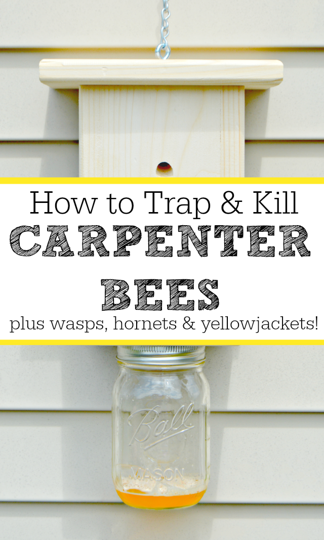 http://www.mom4real.com/wp-content/uploads/2016/05/how-to-trap-kill-carpenter-bees-wasps-yellowjackets-hornets-1.png