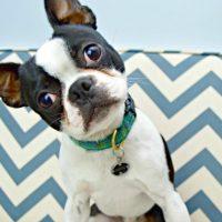 DIY Dog Deterrent Spray – Helps Stop Indoor Accidents and Chewing
