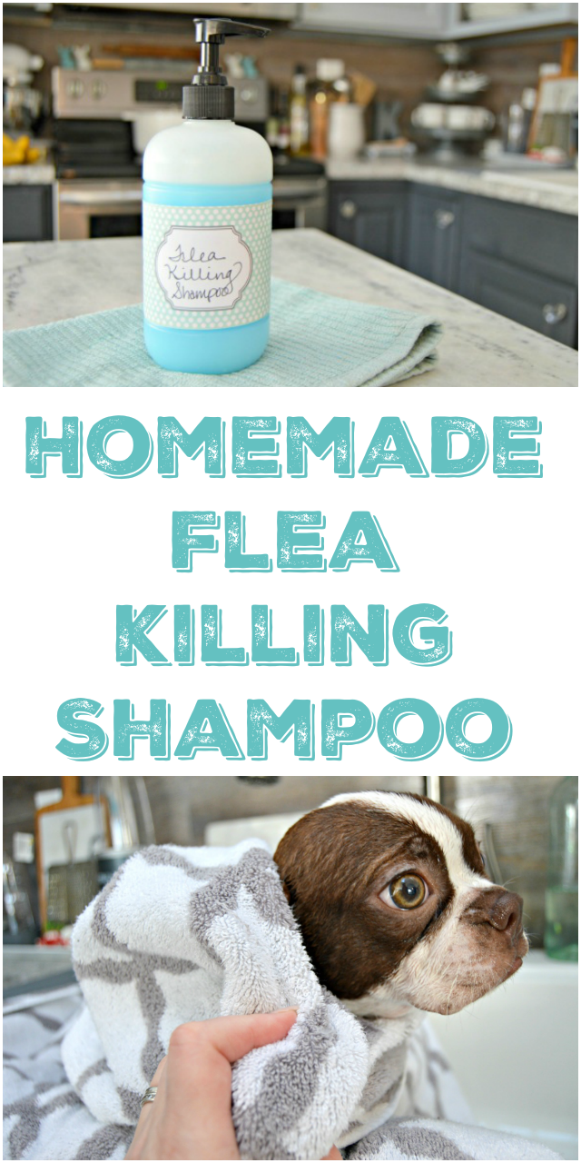 homemade flea killing shampoo