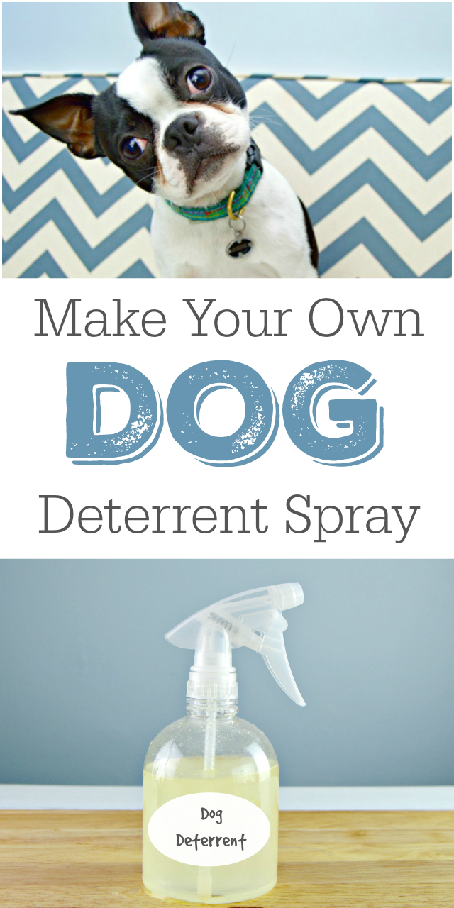 DIY Dog Deterrent Spray - Helps Stop Indoor Accidents
