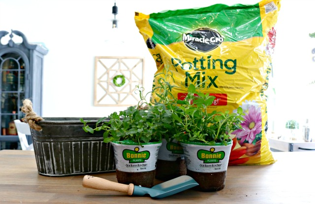 potting mix and herbs