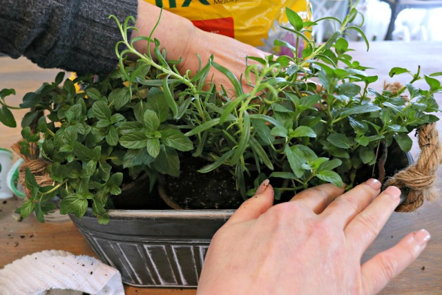 how to plant an indoor herb garden