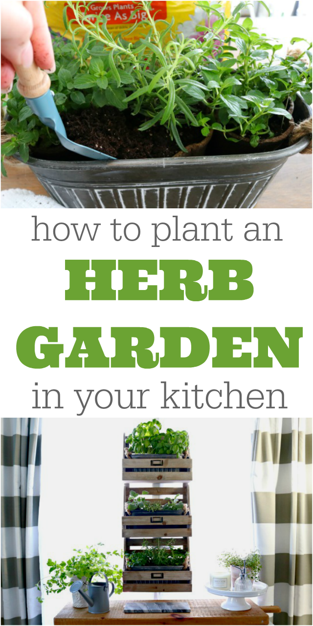 how to plant an kitchen herb garden