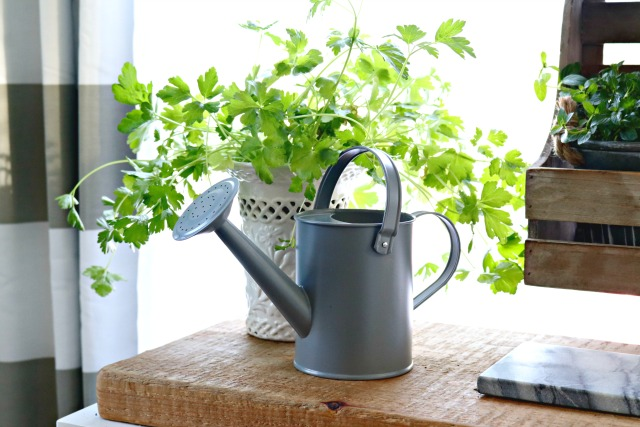 parsley watering can