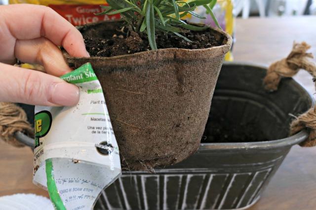 planting rosemary