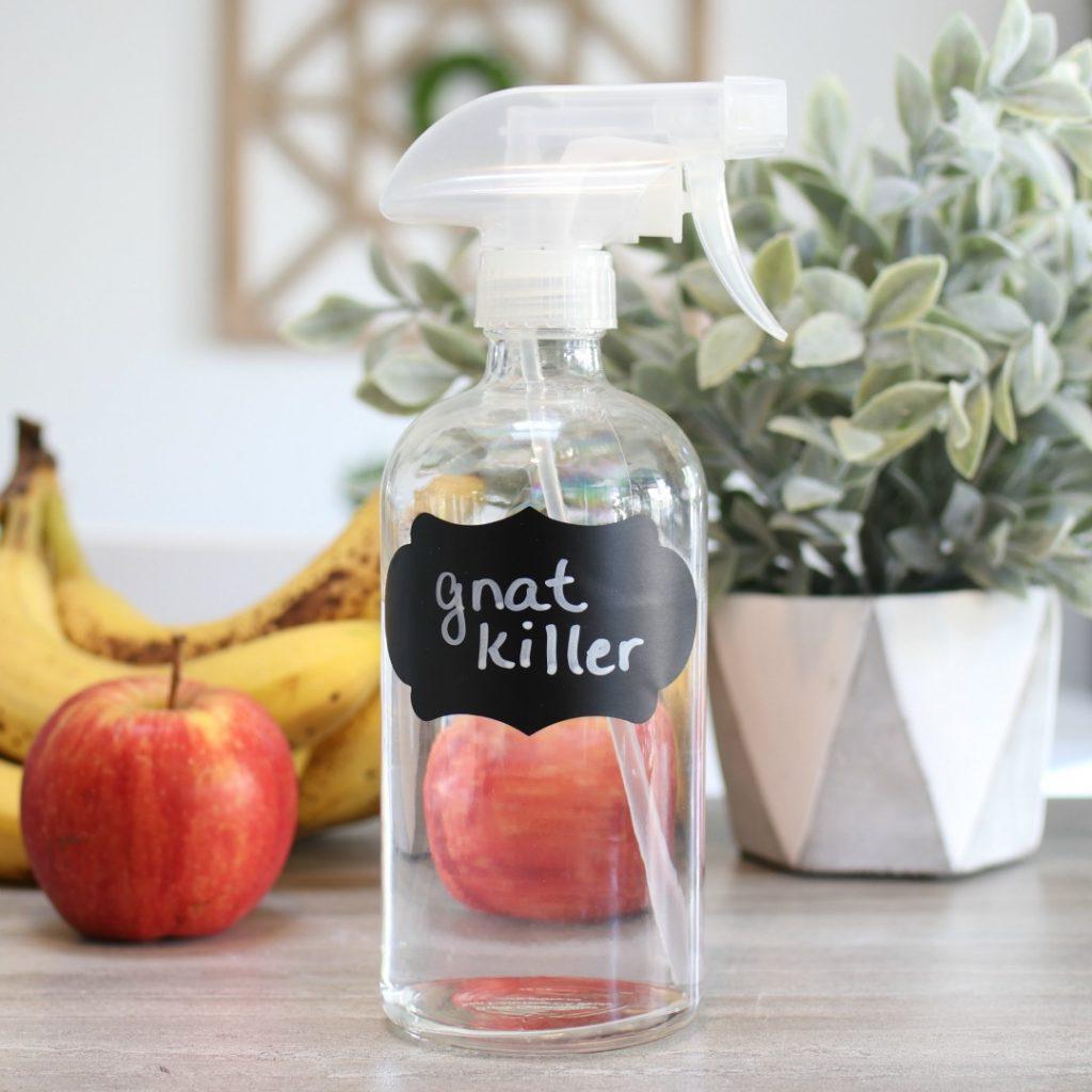DIY gnat killer