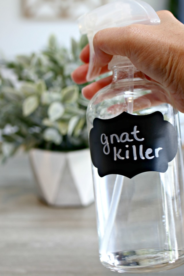 gnat killing spray