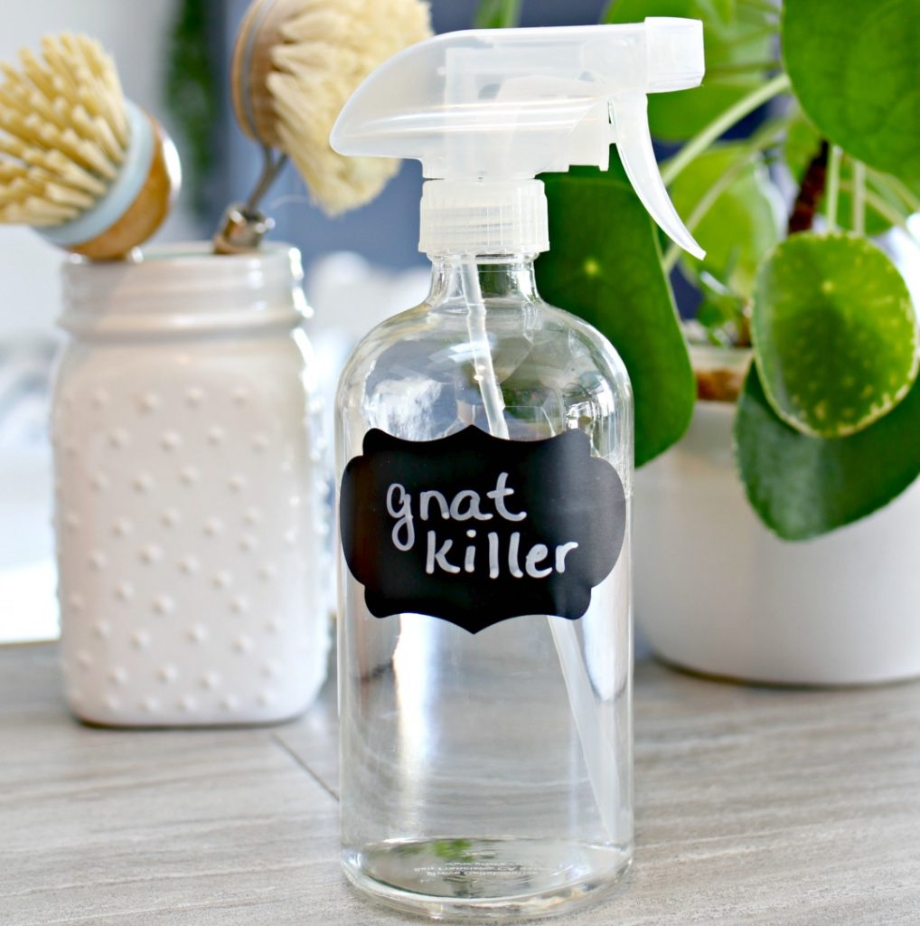 homemade gnat killer