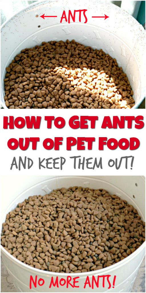 how to get ants out of pet food and keep them out
